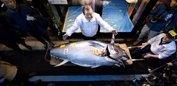 Japanese sushi tycoon pays record $3.1m for single bluefin tuna at new year auction