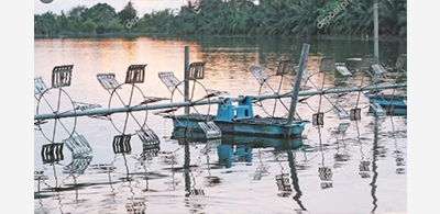 Shrimp farms stare at loss due to disruption in supply chain