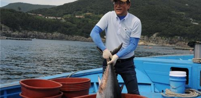 S. Korea to begins sales of farmed bluefin tuna