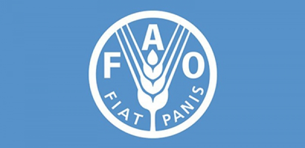 FAO calls for new vision for fisheries