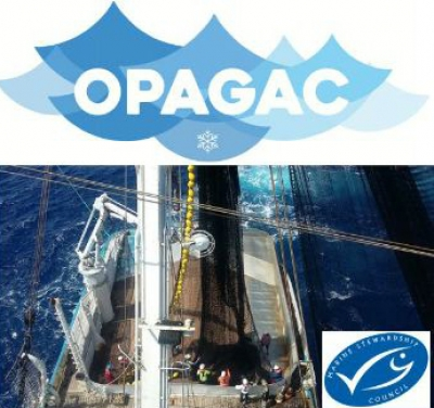 SPANISH TUNA FLEET STARTS PROCESS TO OBTAIN MSC CERTIFICATION FOR ALL ITS CATCHES