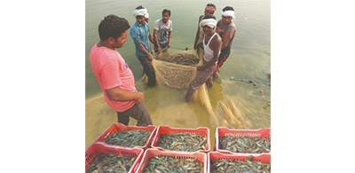 Coronavirus: Indian seafood exports just slowed down, says MPEDA