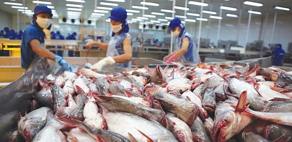 Export challenges push pangasius fish prices to 10-year low